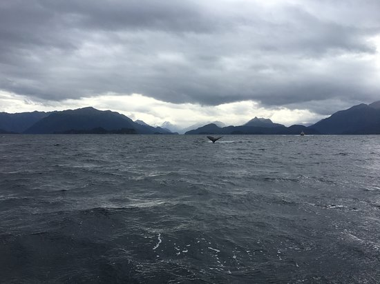 Coldwater Alaska: Whale watching - September 2017
