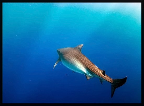 The Residences At Waikiki Beach Tower Shark Dive