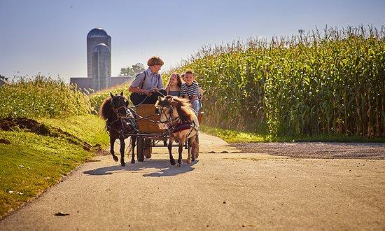 Lancaster, PA: Lil Miniature Horse Farm