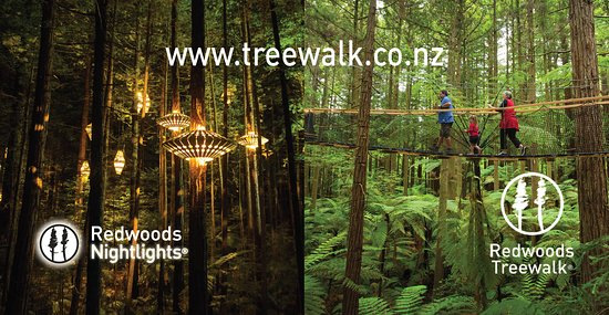 ‪Redwoods Treewalk‬