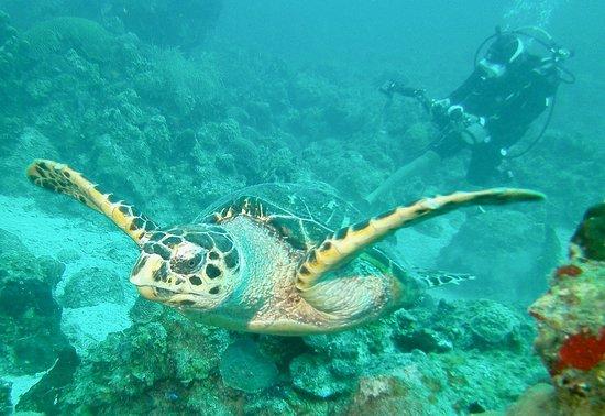写真N2theBlue Scuba Diving枚