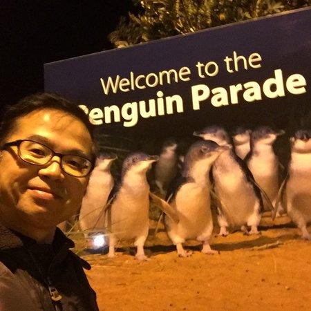 Phillip Island Nature Parks - Penguin Parade: photo7.jpg
