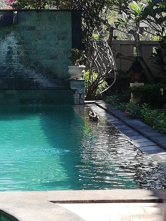 Фотография Rama Shinta Hotel