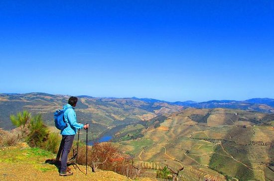 Hiking - Into the Douro Vineyards