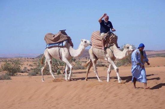 Reserve Agadir Desert Safari dia de...