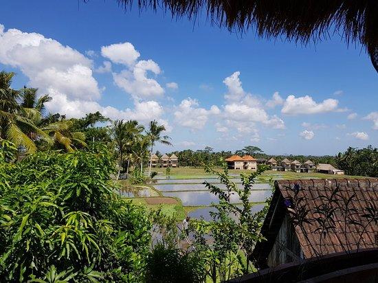 Petulu, Indonesia: 20180615_122722_large.jpg