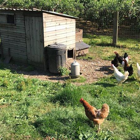 Ash House Farm Bed & Breakfast ภาพ