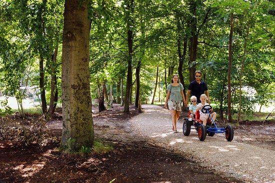 RCN het Grote Bos: Wandelen over ons bosrijke park