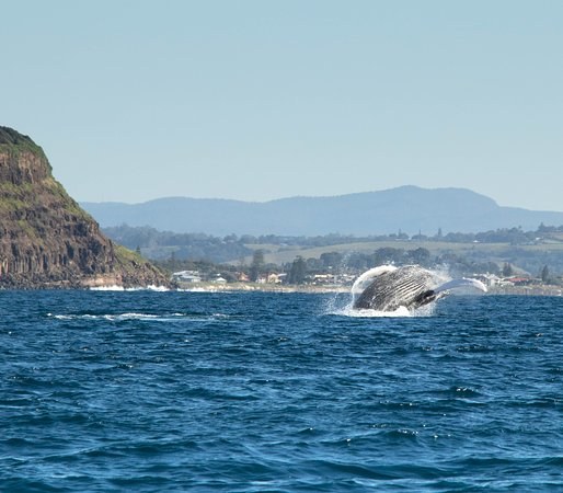 Premier Whale Watching Byron Bay: Whales just kept on breaching. This was taken off Lennox Head.