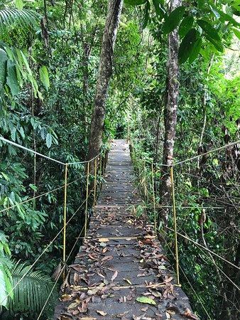 Madagui Forest Resort: Sky walk