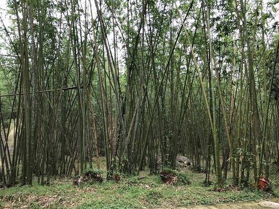 Madagui Town, Việt Nam: Bamboo garden