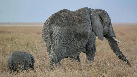Национальный парк Тарангире, Танзания: Tarangire national park. Home of African elephants.