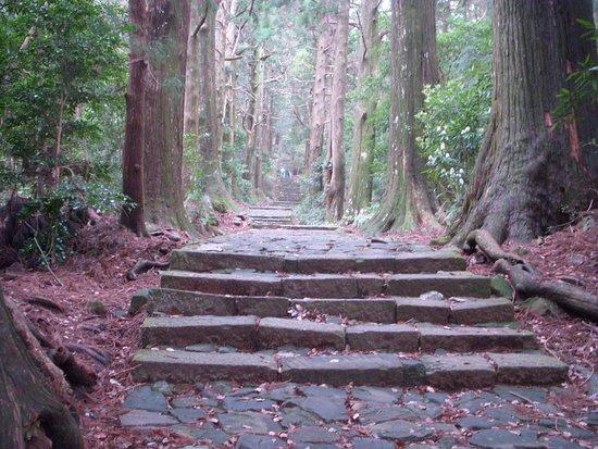 Daimonzaka: 昼でも薄暗いスギ林の中を登っていきます。石段がぬれいてる際は滑りやすくなります。