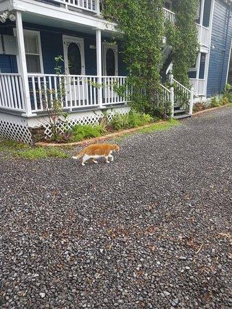 Charleston's NotSo Hostel: 20180612_191214_large.jpg