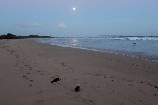 Puerto Villamil, Ecuador: Spiaggia e luna