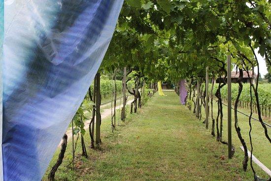 Le Vigne di San Pietro: La vecchia pergola che porta al laghetto