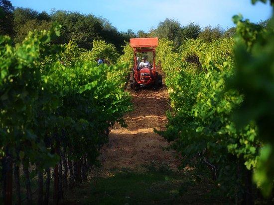 Murphys, CA: Twisted Oak Winery | Maria Camillo