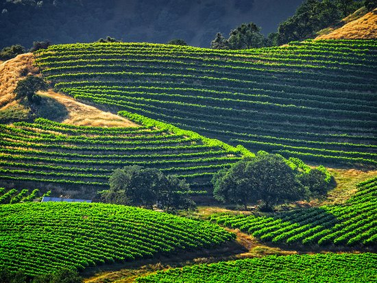 Murphys, CA: Renner Winery