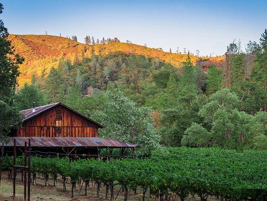Murphys, CA: Stevenot Winery | Cindy Rochelle