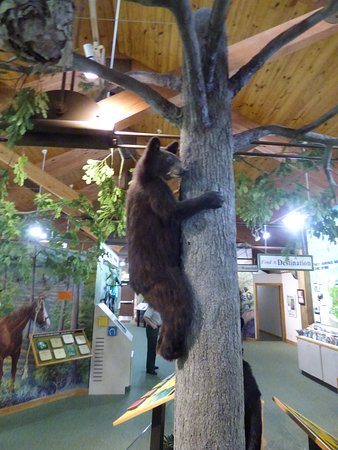 Pisgah Visitor Center: bear