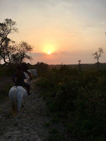 Balade et cours d équitation