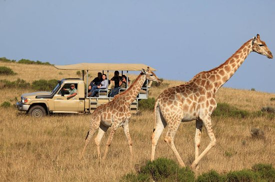3-dages Garden Route Tour med Safari...