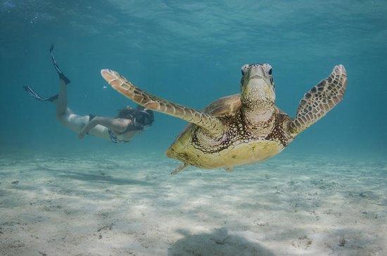 Marine Life Discovery & Lagoon...
