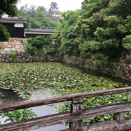 Kochi Castle: photo5.jpg