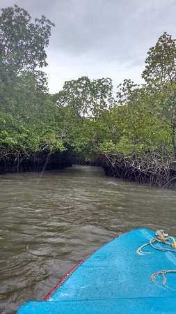 Baratang Island, India: route through mangroves