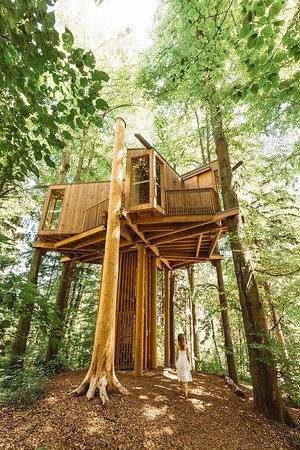 City Forrest Tree House