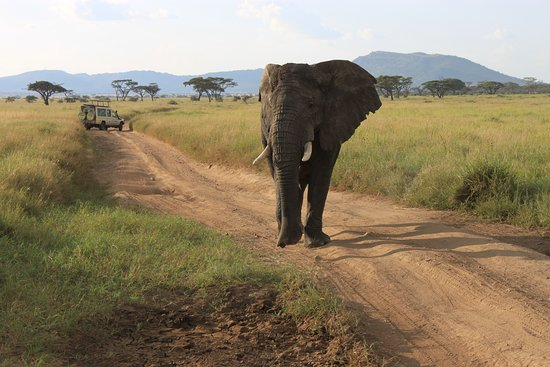 Shayona Safaris & Tours: Heavy traffic on the road
