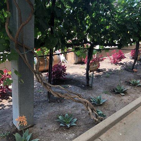 Temecula Valley Jeep & Wine Tours: photo3.jpg