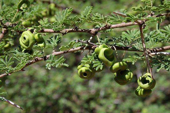 Marloth Park, แอฟริกาใต้: Seeds