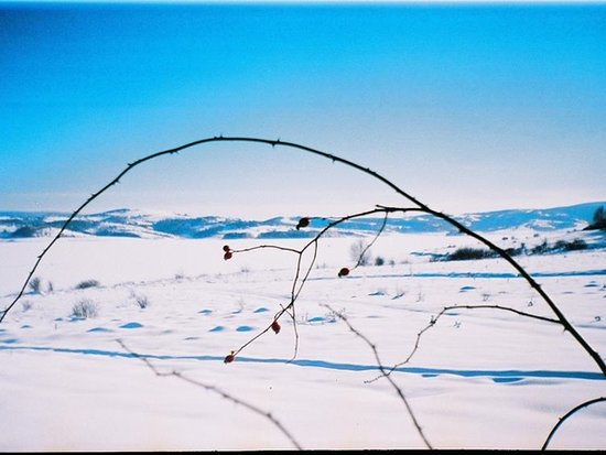 Vlasinsko Jezero Photo