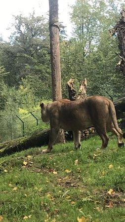 Anif, Áustria: حديقه حيوان سالزبورغ