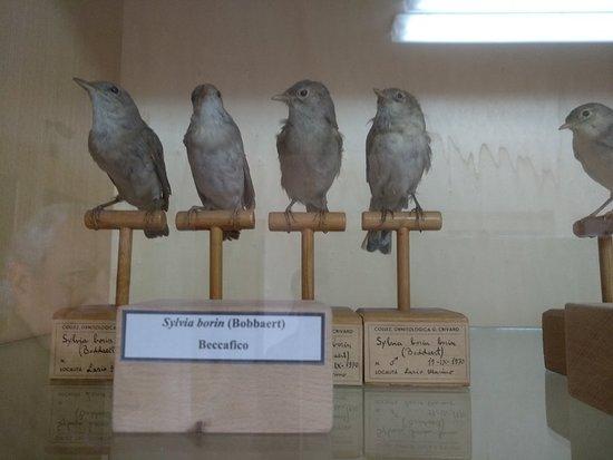 Museo Della Biodiversita