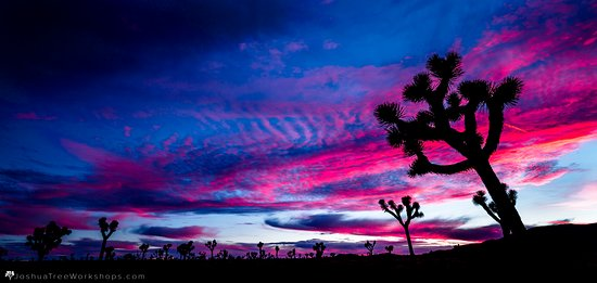 Sunset Photography Tours Picture Of Joshua Tree Workshops