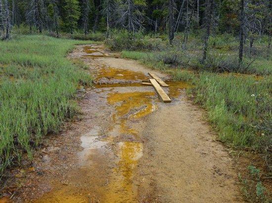 Kootenay National Park, Kanada: Trail