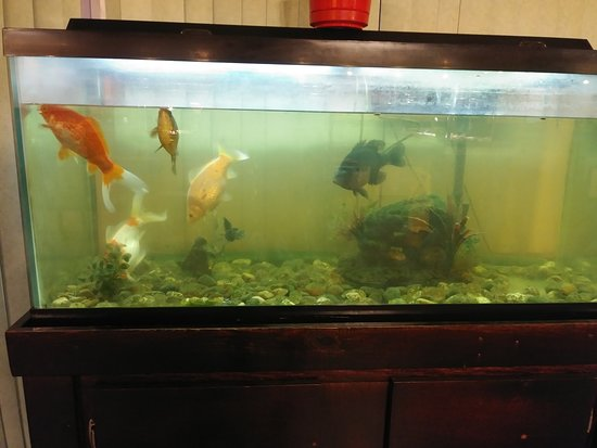 Camby, IN: Poor fish :-(