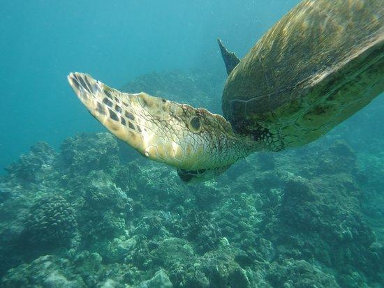 Swam with turteles awsome!!!