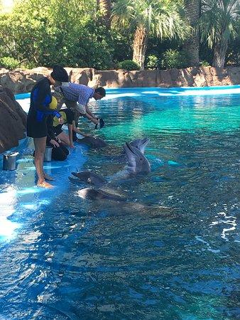 Bilde fra Siegfried & Roy's Secret Garden and Dolphin Habitat