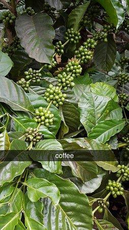 Me Linh Coffee Garden Dalat ภาพถ่าย