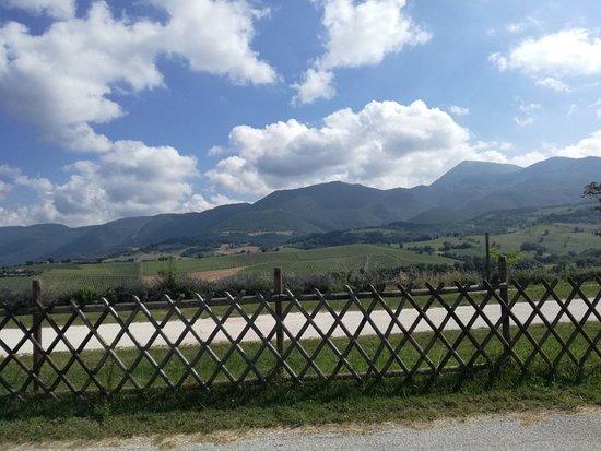 Country House Salomone: IMG_20180616_094605_large.jpg