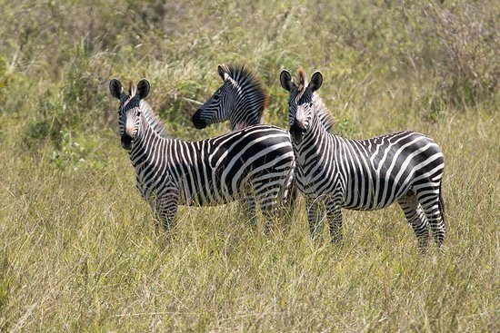 Selous Game Reserve Photo