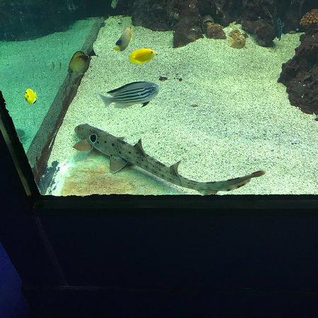 Zoo Aquarium de Madrid: photo2.jpg