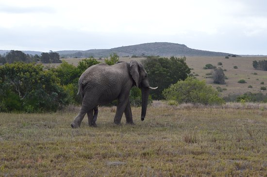 Driekoppen, Sudáfrica: the drive