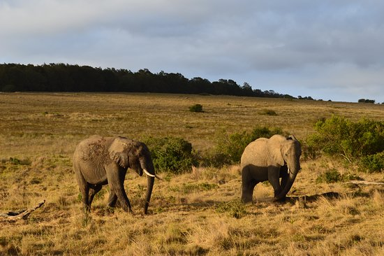 Lalibela Game Reserve: the drive