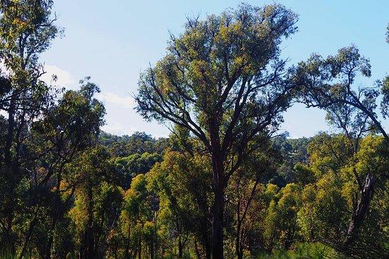 Gidgegannup, Australia: Serene