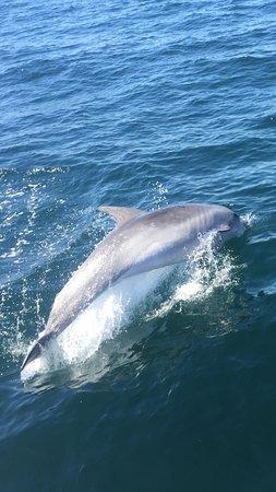 Ocean Quest: Dolphin