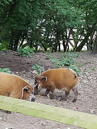 Howletts Wild Animal Park: 20180615_132829_large.jpg